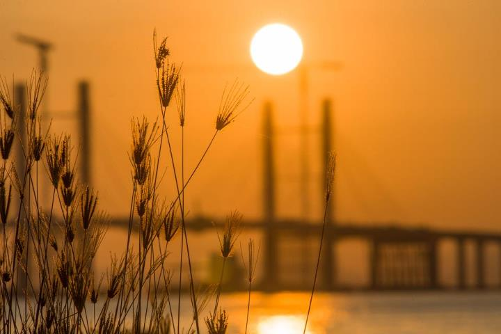 penang-bridge-sunrise-wheat