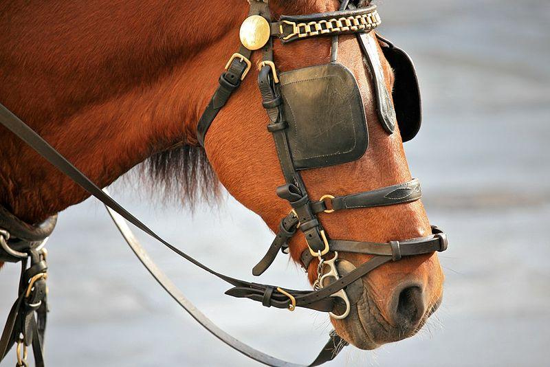 horse-blinkers